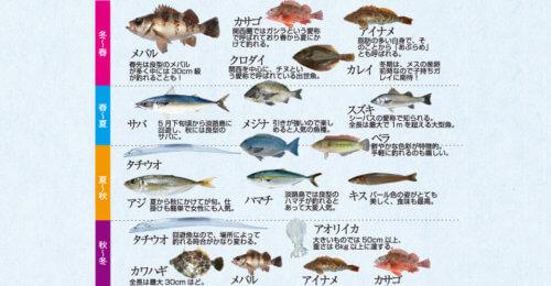 淡路島の釣り対象魚
