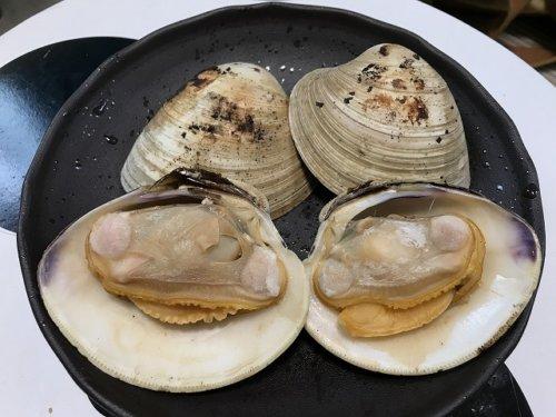 ホンビノス貝