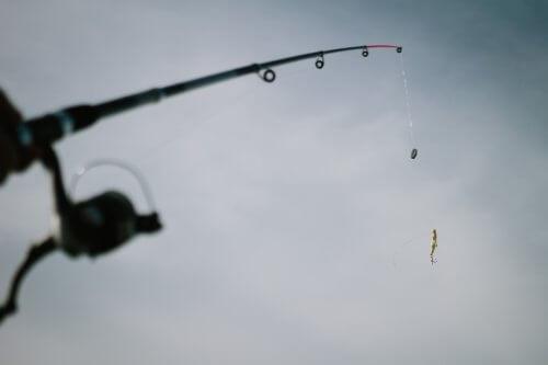 シーバスが釣れない