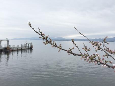 春のバス釣り