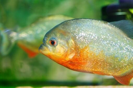 外来魚問題
