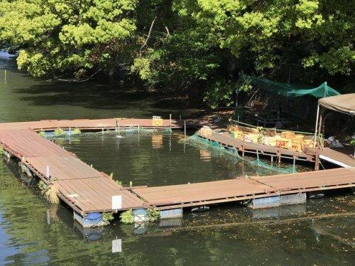 弁慶フィッシングクラブの餌釣り池