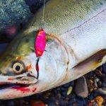 オホーツクの宝!カラフトマスの釣り方とレシピをご紹介!