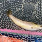 芦ノ湖のヒメマスを釣って食べる!家族連れで楽しむボート釣り